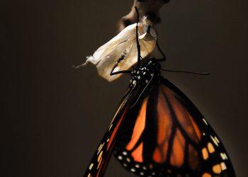 la Trasformazione - Andrea Mamone